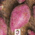 Varias Batatas Doces Sobre uma Mesa Rustica